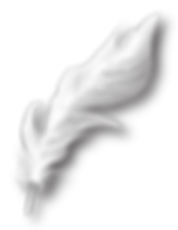 White Feather Transparent Background-01.