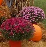 Pumpkins%2520Pic_edited_edited.jpg