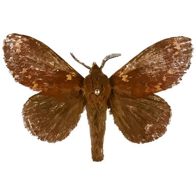 Dendrolimus kikuchii