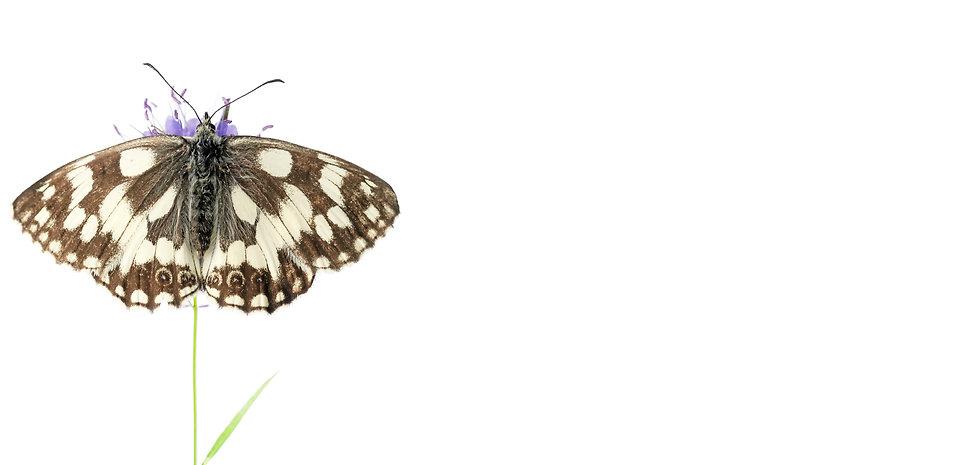 bgbanner-butterfly1-large.jpg
