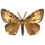 Thumbnail: Lymantria dispar