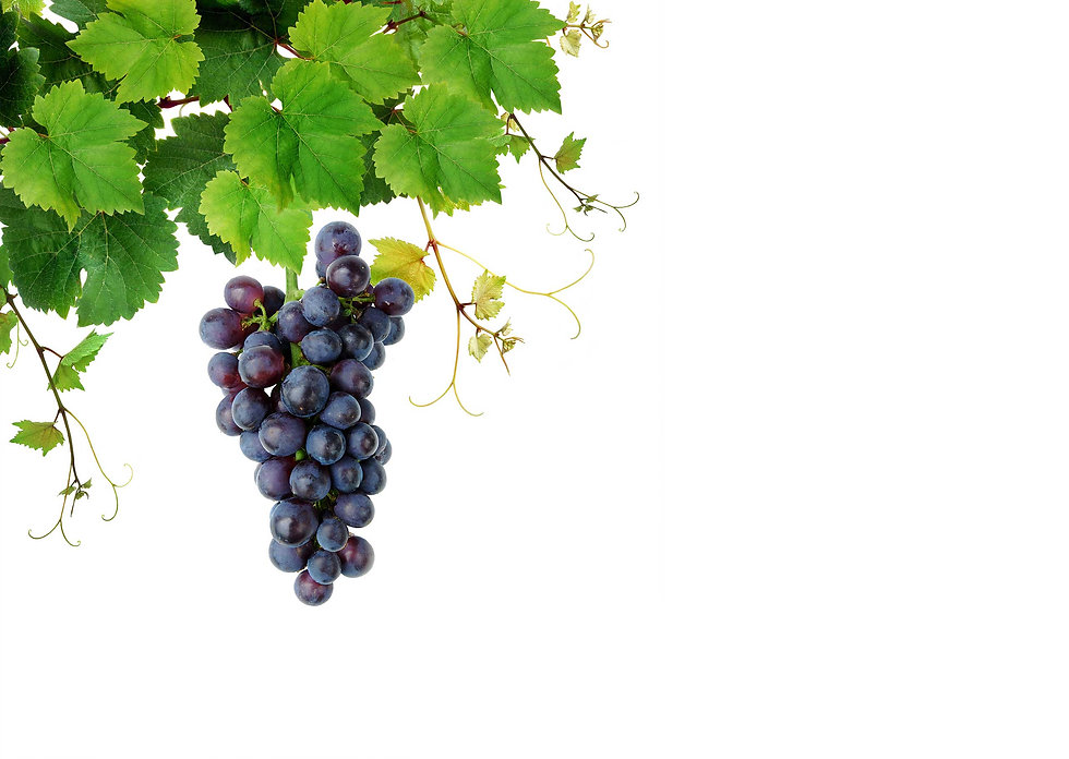 grape_matingdisruption.jpg