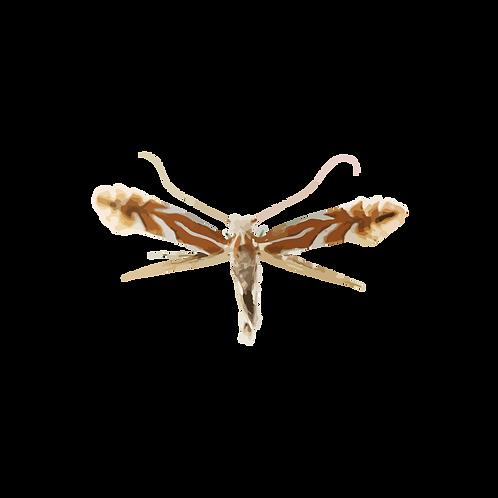 Phyllonorycter ringoniella