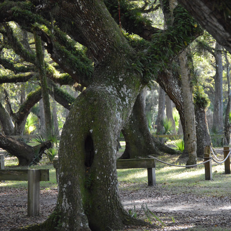 What trees taught me about life