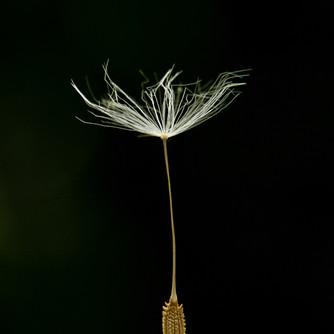 Jessica Stanitz Fotografie-57.jpg