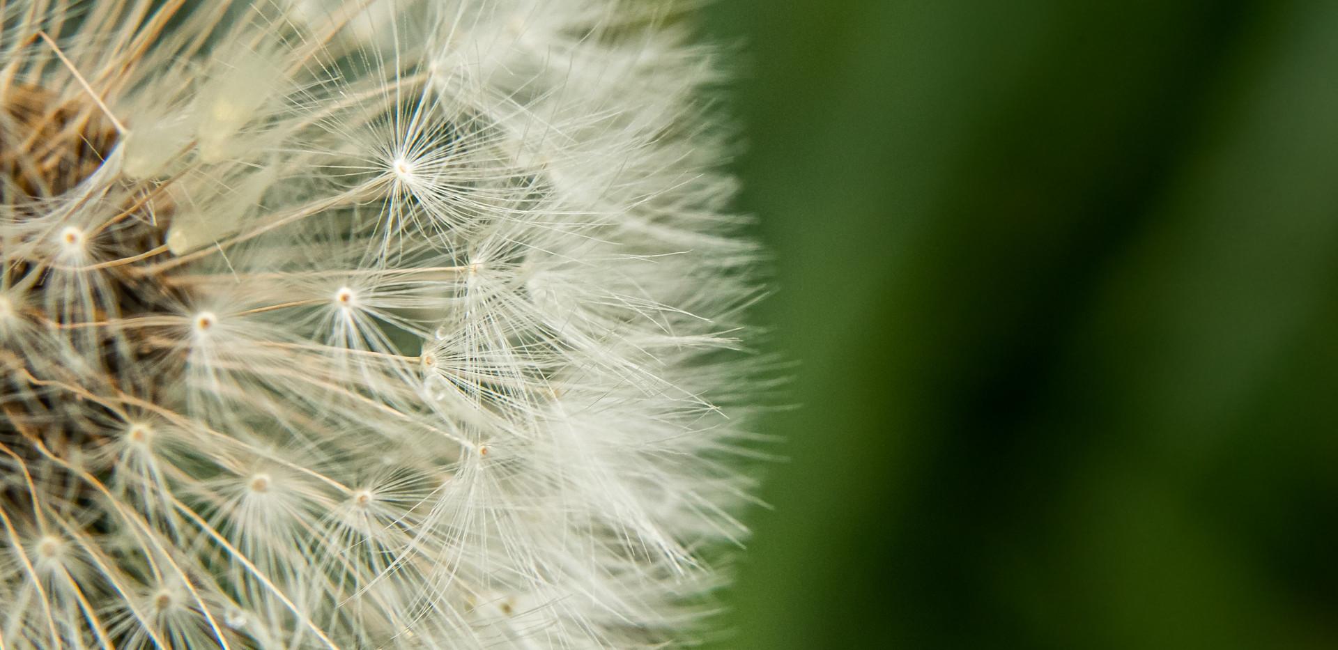 Jessica Stanitz Fotografie-44.jpg