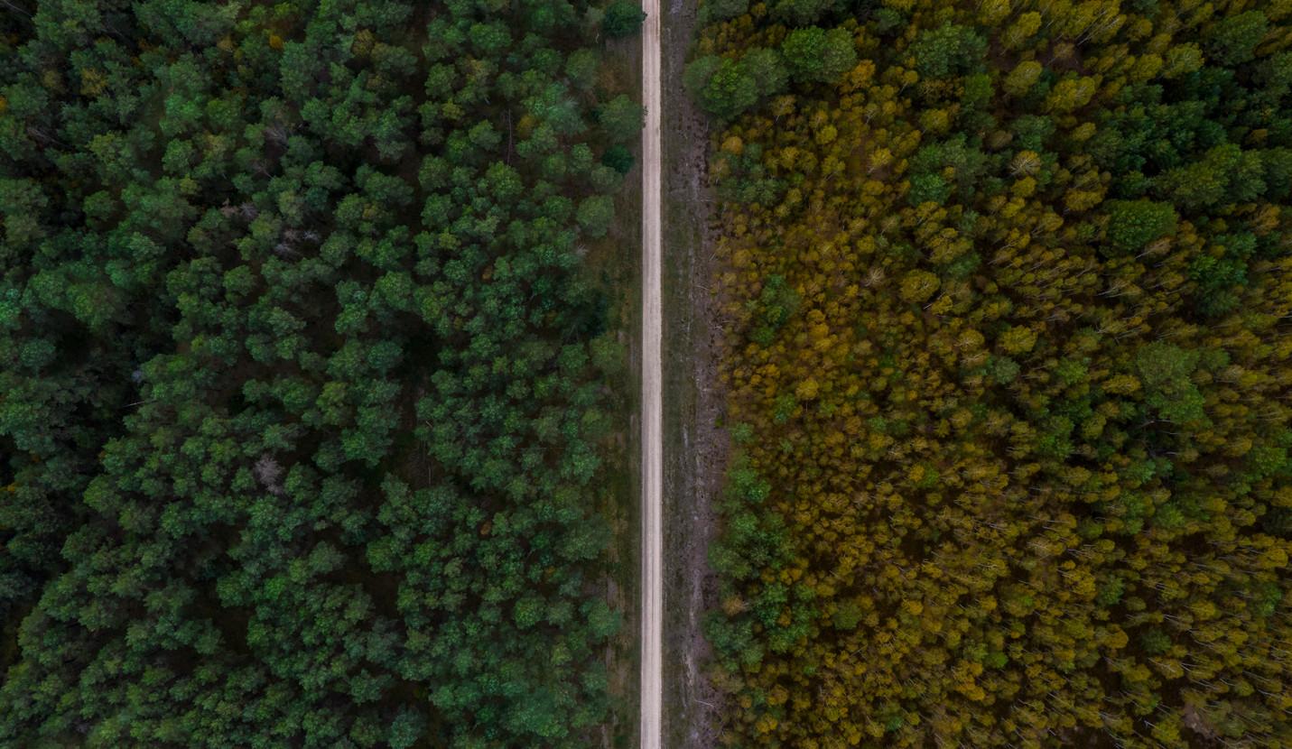 Luftbild _ Wald