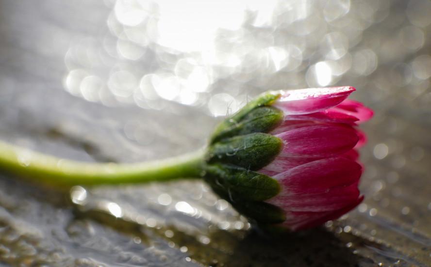Jessica Stanitz Fotografie-33.jpg