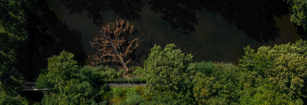Luftbildaufnahmen Baum _ Natur