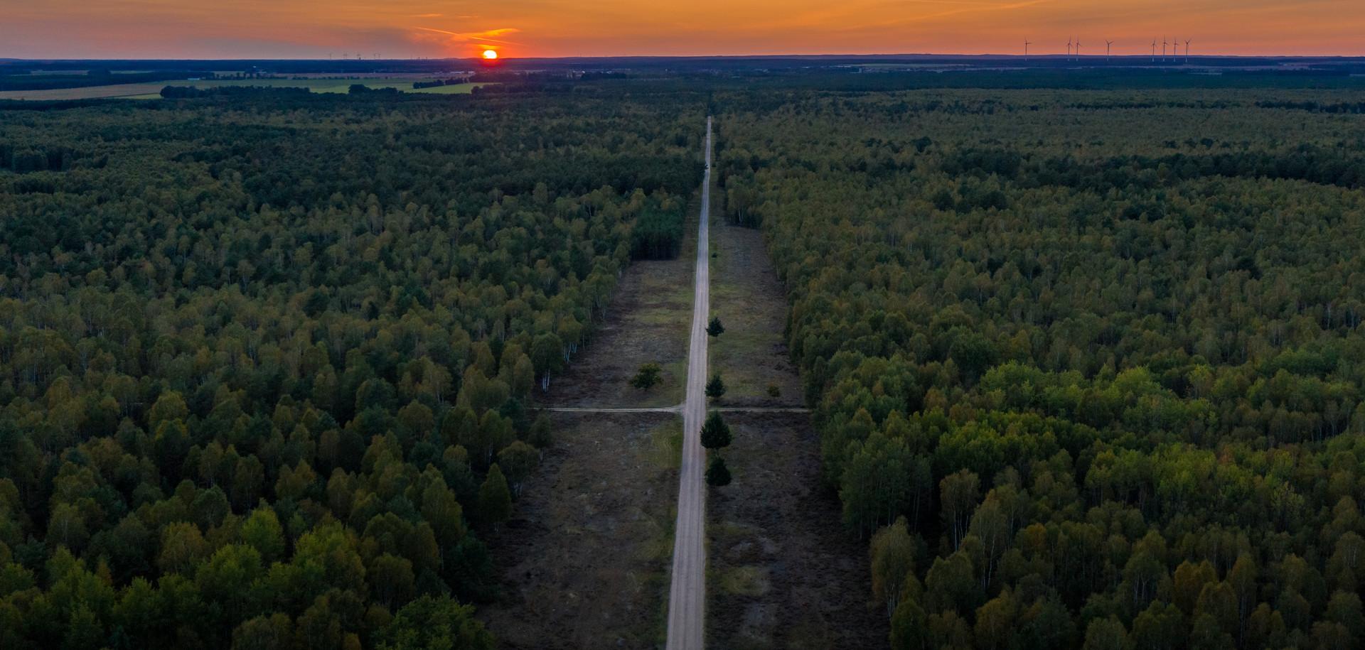 Luftbild Wald