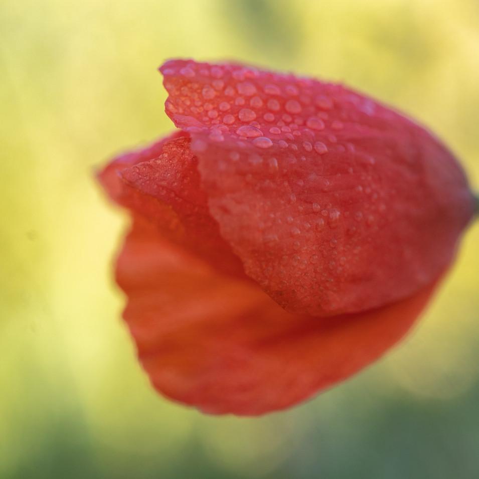Jessica Stanitz Fotografie-37.jpg