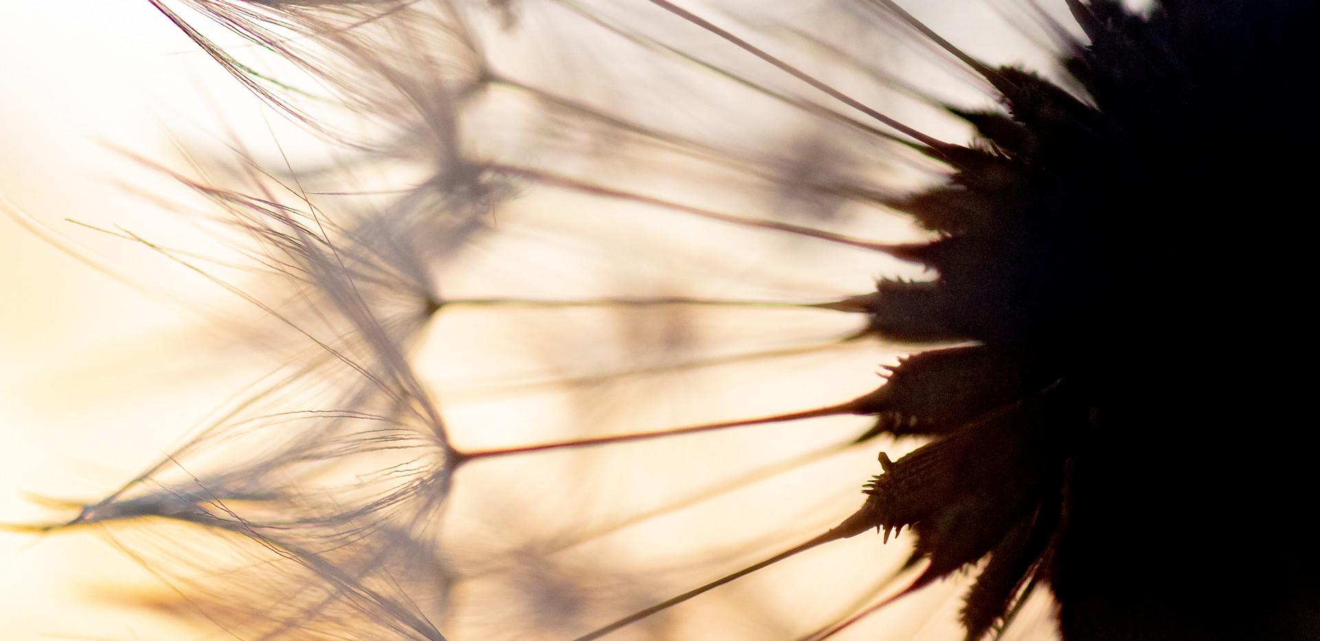 Jessica Stanitz Fotografie-19.jpg