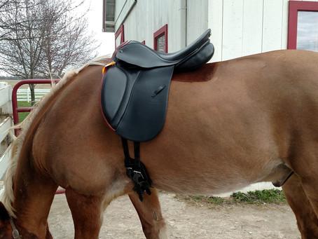 "Back ""Breaking"" Saddles"