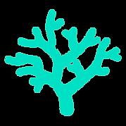 koraal.png