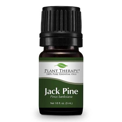 Jack Pine Essential Oil
