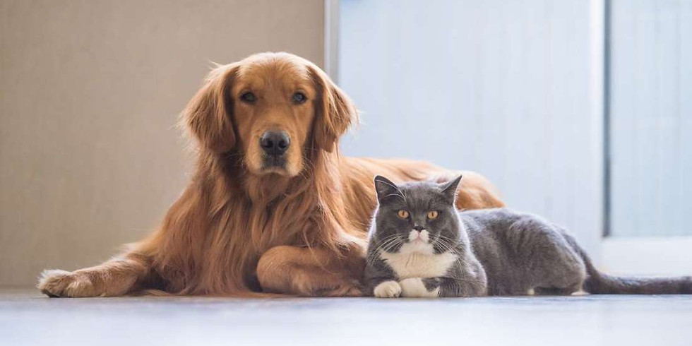 Essential Oil Workshop- Blends for Cats & Dogs