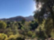 Mtn sunburst thru trees_.jpeg
