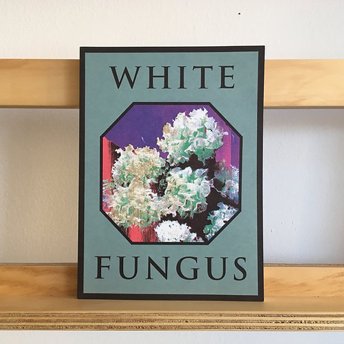 White Fungus Issue 16 Reading Room