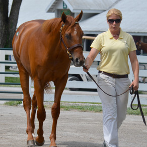 What I should consider before buying a horse?