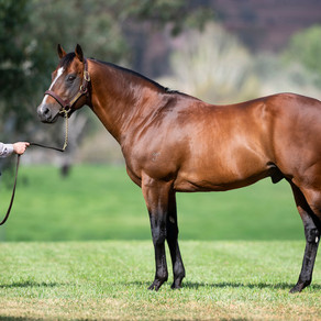 Variables to consider when selecting a horse