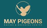May Pigeons.JPG