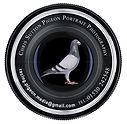 Chris Sutton-Logo-black on white.jpg