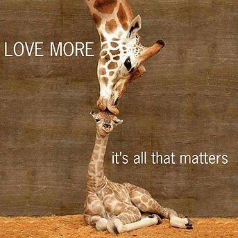 giraffes Love More.jpg