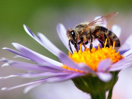 Bienchen und Blümlein