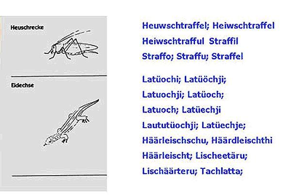 Heuschrecke_und_Eidechse.jpg