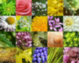 Free Plants By Mail | United States | Products Available -Flowers