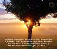 Sunrisethrutree_IPeter2v9.jpg