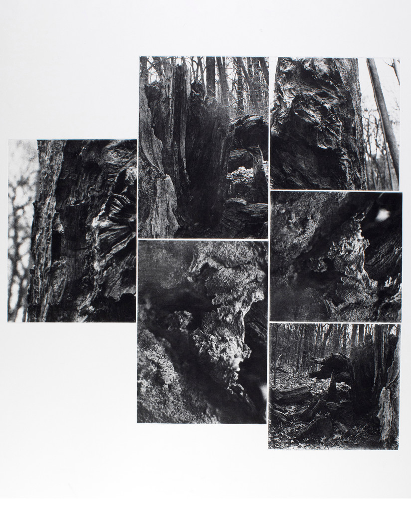 """Roots/Underworld, 2019. 6 Plate-Photogravure; 27 ½"""" x 33 ¼"""". Image courtesy of the artist."""