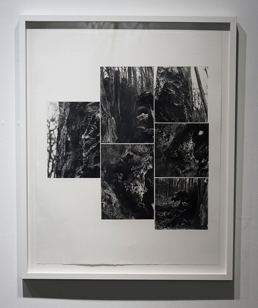 Roots/Underworld, 2019. 6 Plate-photogravure, 33 ¼ x 27 ½  inches