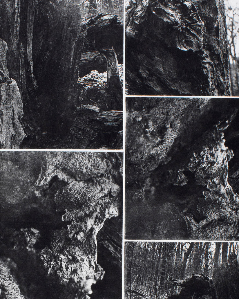 """Roots/Underworld [detail], 2019. 6 Plate-Photogravure; 27 ½"""" x 33 ¼"""". Image courtesy of the artist."""