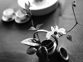 認定教室・茶入門講座 春季講座 が4月より始まります。