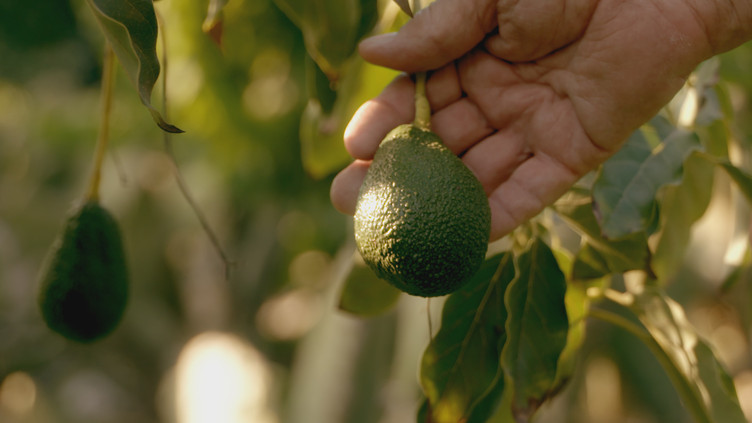 """""""Passionfruit"""" Selected for Newport Beach Film Festival"""