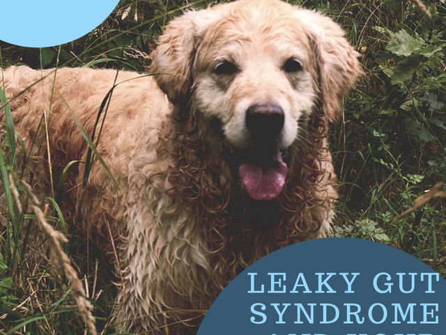 Leaky Gut Syndrome and your Dog
