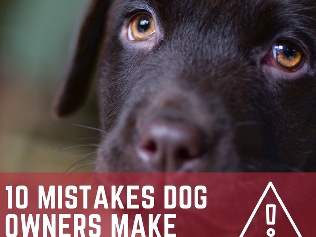 Top 10 Mistakes Dog Owners Make