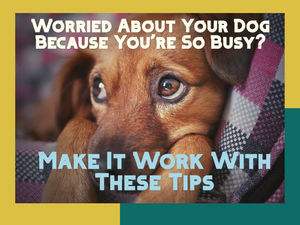 22 Ways to Take Care of a Dog or Puppy While You're Busy Working