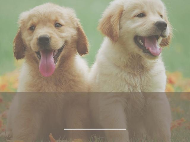 SPECIAL OFFER: Epi-Genius DogSuperfoods for Your Super Dog