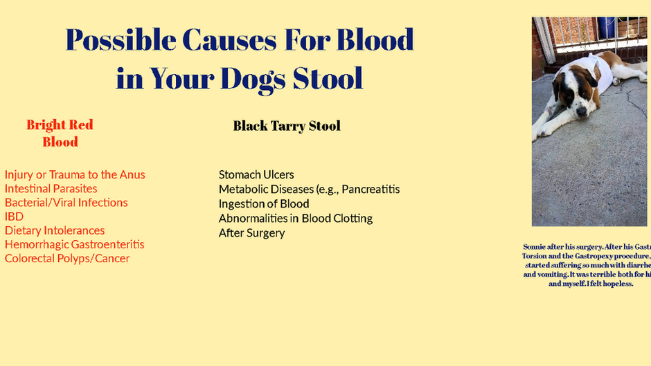 Natural Solutions For Your Dog's Diarrhea
