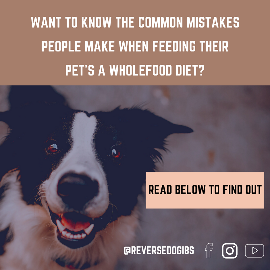 Mistakes Most People Make When Feeding Their Pet's A Wholefood Diet