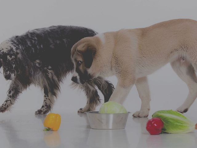 Which Vegetables Are Good for Dogs, And Which Aren't