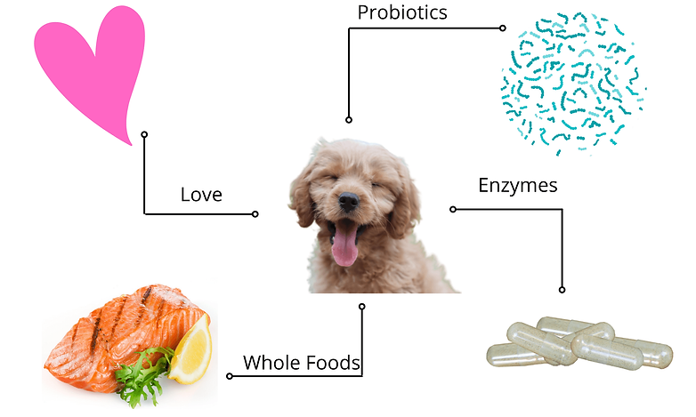 dog IBS (1).png
