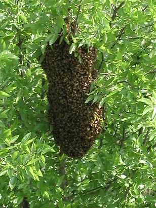 swarm1.jpg