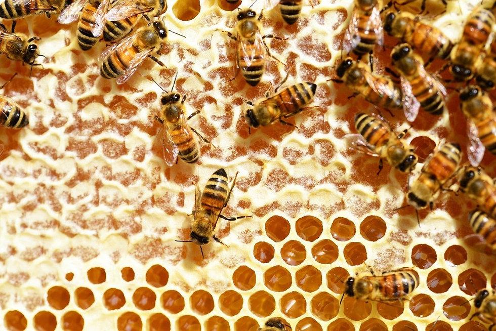 bees-345628_1280.jpg