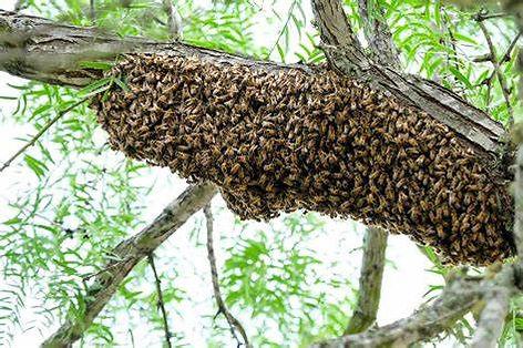 swarm2.jpg