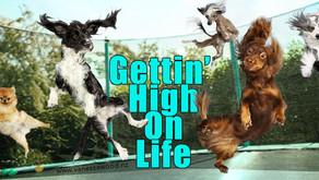 Gettin' High On Life: Raising Your Vibration