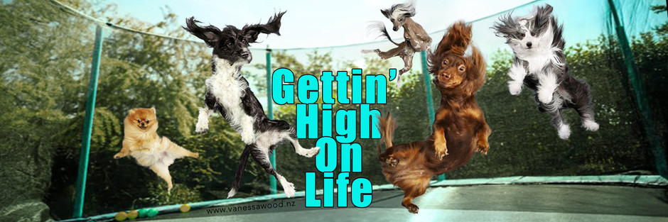Gettin' High On Life: Raising Your Vibration