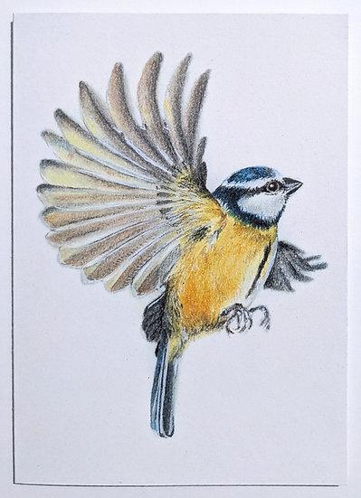 Cornish Bluetit Art Print Card